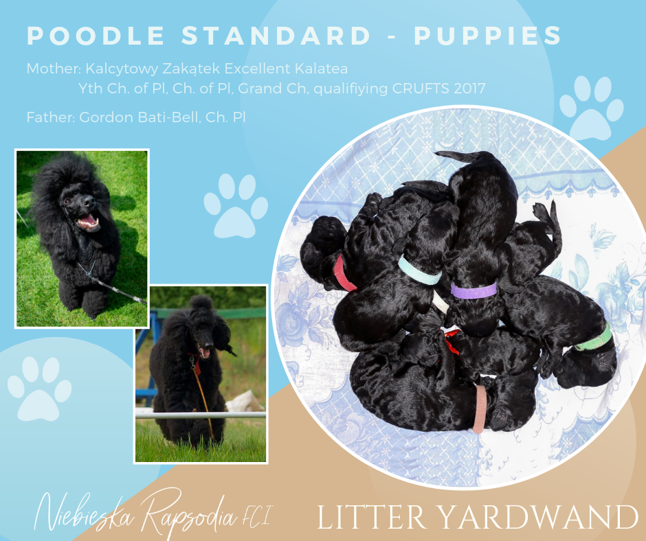 Litter Yardwand, poodle standard black